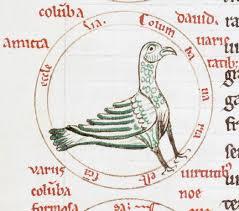 de avibus fouilloy oiseau
