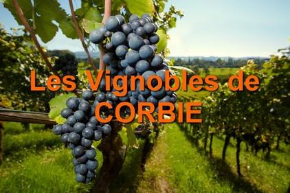 Histoire des vigobles de Corbie